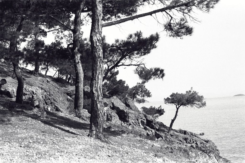 Woods on [?Buyukada, Prince] Islands near Istanbul.