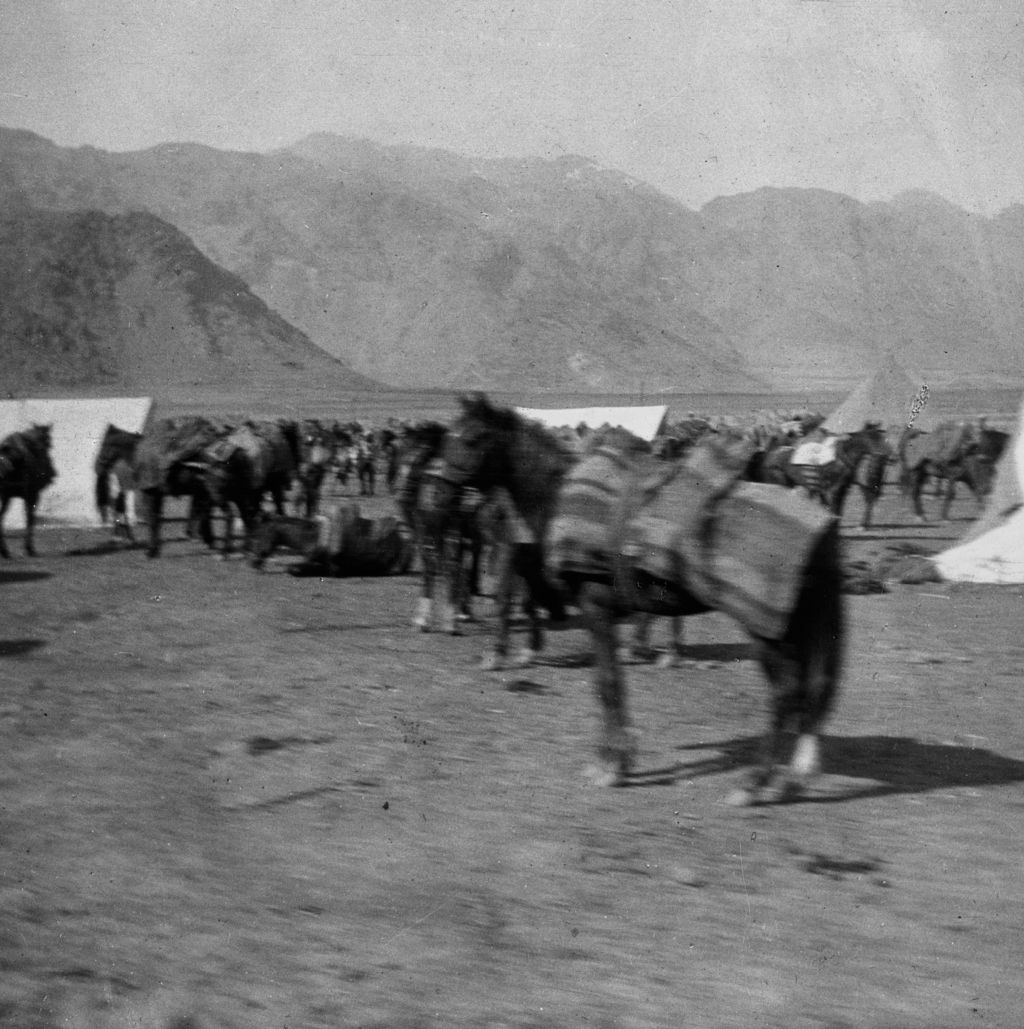 Pack horses in military camp.