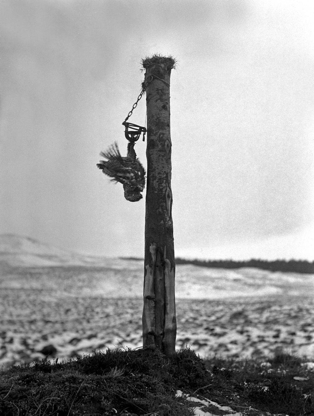 Pole trap, Loch Tulla.