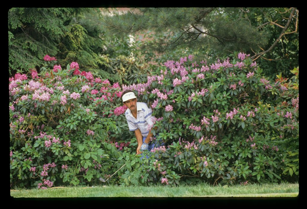 South African golfer David Frost looks a little startled to find himself amongst the shrubbery at the 1988 US Open