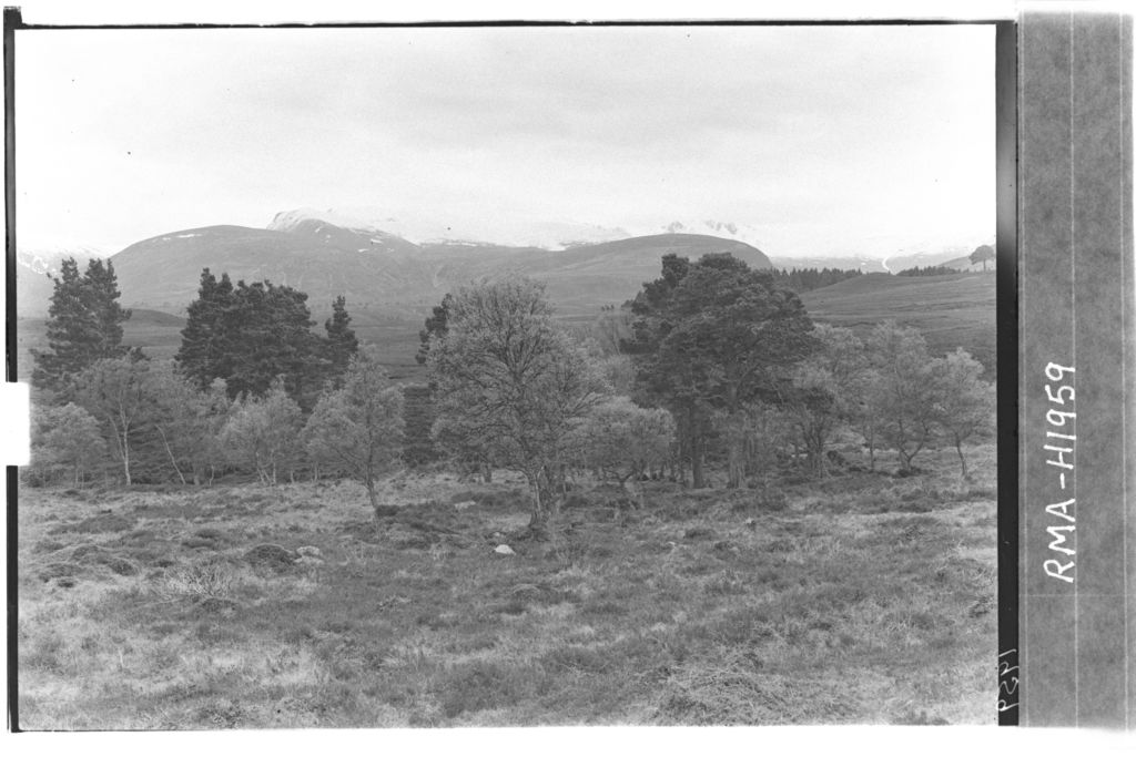 Natural forest below Cairngorms.