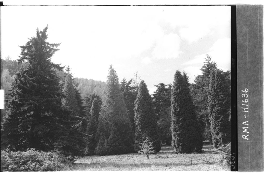 Conifers, Rohallion Castle.