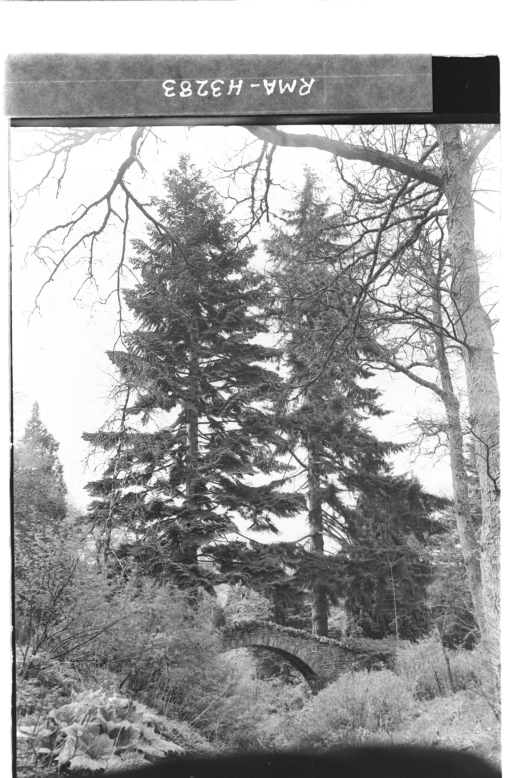 Firs and Bridge, Dawyck House.
