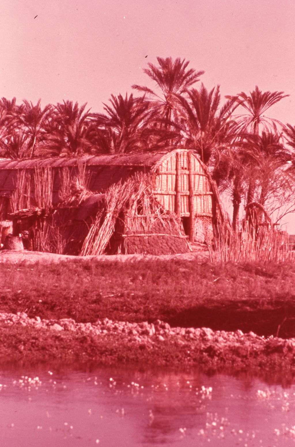 House near the marshlands of Southern Iraq