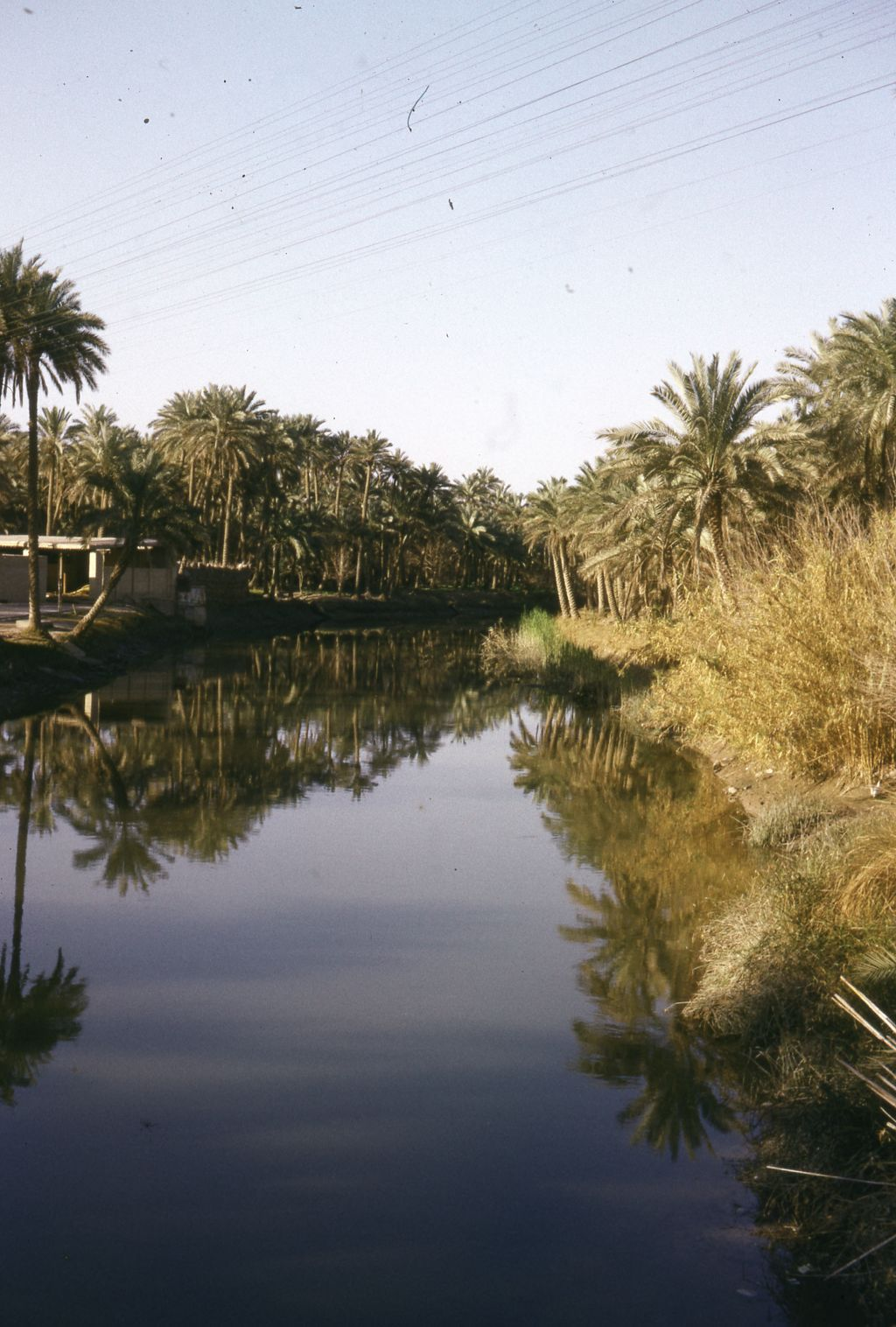 River bank near the marshlands of Southern Iraq