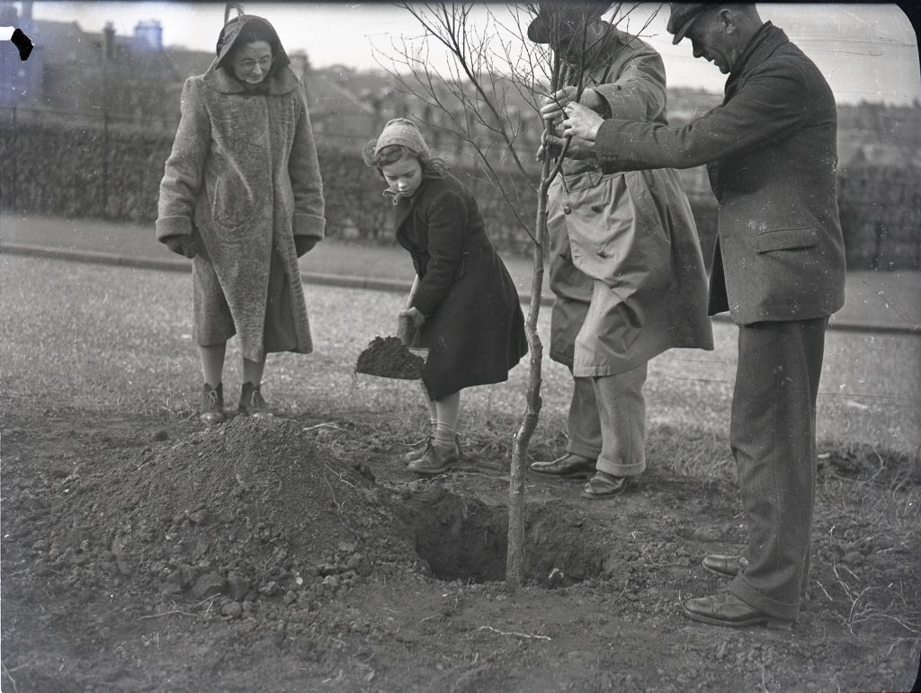 Tree planting in Lamont Drive and Chamberlain Street, St Andrews.