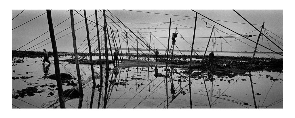 Constructing the Fly Net, Boddin, 2000