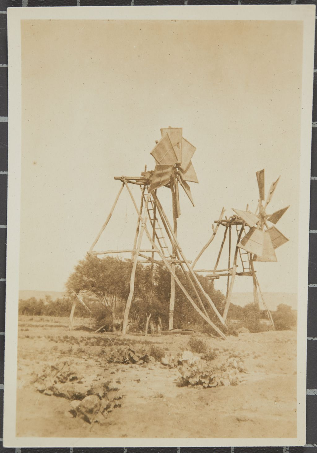 Windmills used by natives to irrigate their plots of garden