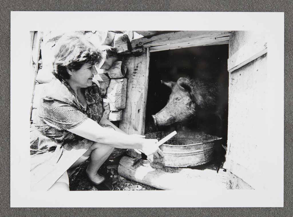 [Woman feeding a pig, Soviet Union]