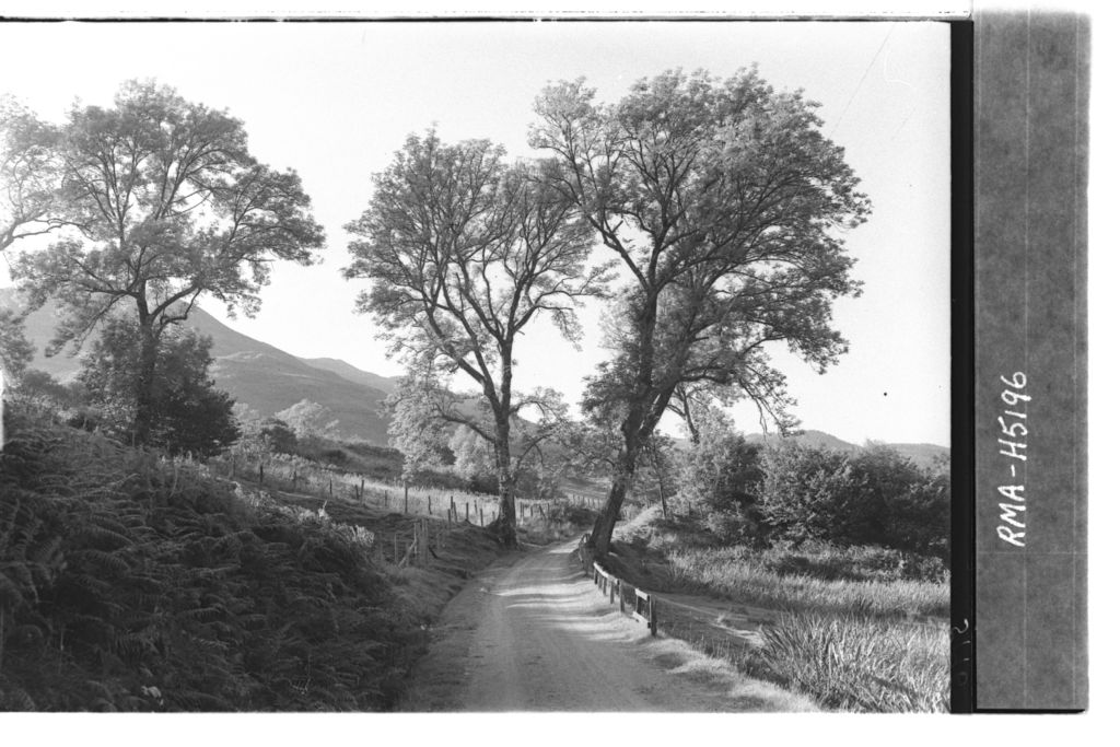 Roadway and trees, Letterfearn.