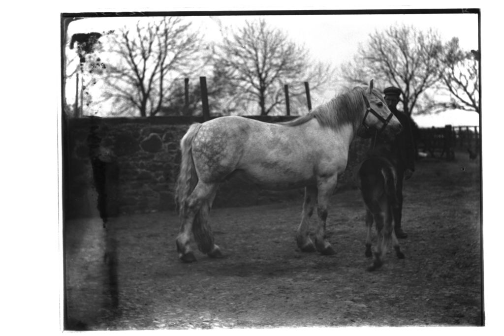 Bell and foal, Balcormo.