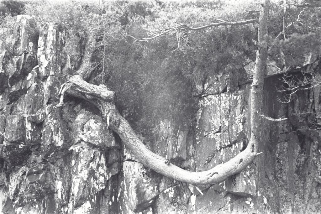 Gnarled tree trunk, the Higlands, Scotland