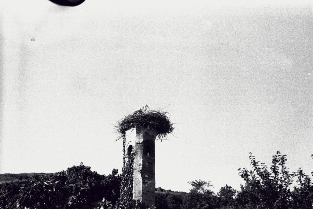 Nesting storks, The Islands near Istanbul.