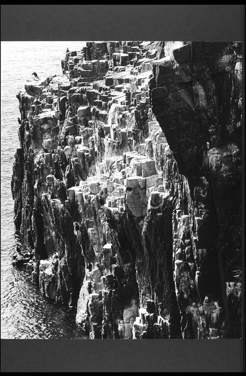 Isle of May - West Cliffs.