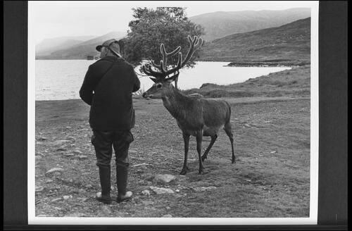 Tom Rigg and stag, Loch Ossian.