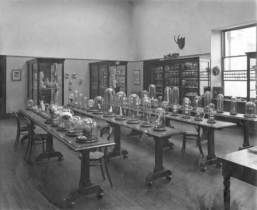 The Anatomy Laboratory