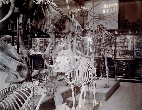 Museum of Zoology, Dundee.