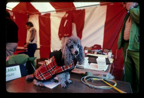 A four legged companion during the 1982 Bing Crosby Pro Am