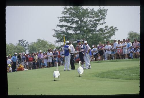 Two feathered spectators get up close to watch the action on the green as golfer Payne Stewart keeps an eye on them at the 1989 USPGA Championship