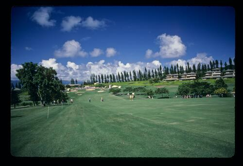 A scenic view of the approach shot at the 1984 Kapalua International Golf Championship