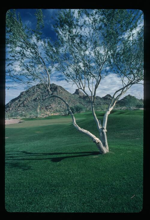 A view of the Desert Highlands Golf Course