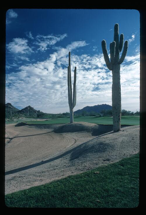 An atmospheric view of the cacti on the Desert Highlands Golf Course