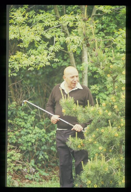 Actor Telly Savalas in trouble in the rough at the Four Stars Charity Golf Tournament