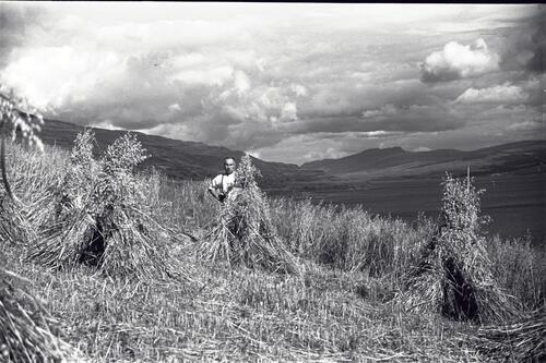 Duncan Macgillivray in the oat field after the harvest,The Burg (Burgh) Farm, Isle of Mull.