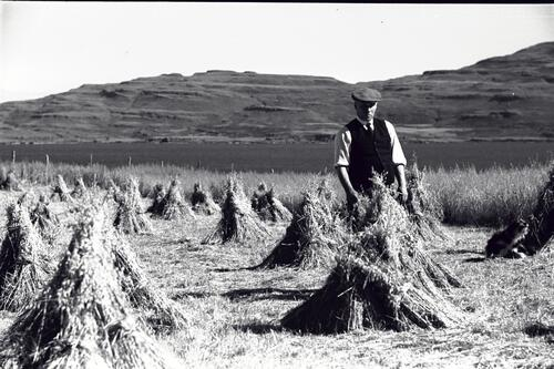 [?Ian Lindsay] standing beside Oat stooks, Burg Farm, Isle of Mull.