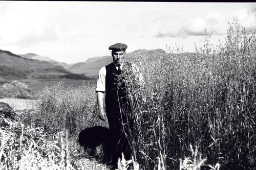 [?Ian Lindsay] standing in Oat field, Burg Farm, Isle of Mull.