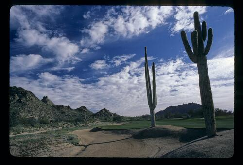 The contrasting landscape of the Desert Highlands resort, complete with Cacti