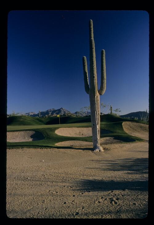 The contrasting landscape of the Desert Highlands resort, complete with Cactus
