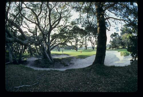 The other side of Pebble Beach, sandy waste and trees