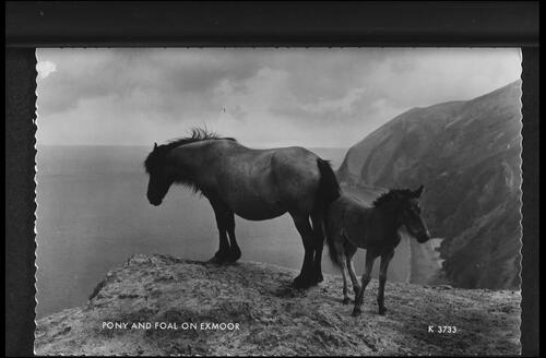 A Pony and Foal on Exmoor.