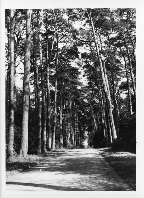 The Avenue, Buxted Park, Uckfield.