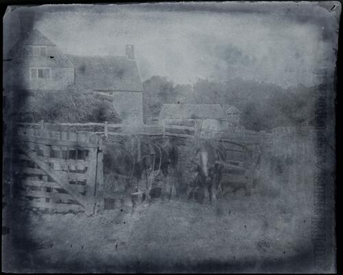 [Horses and carts next to a wooden fence in front of a house]