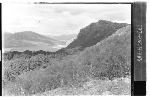 Forest above Loch Carron.