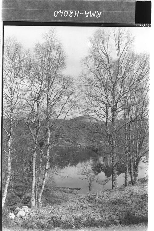 Birch coppice with river Affric.