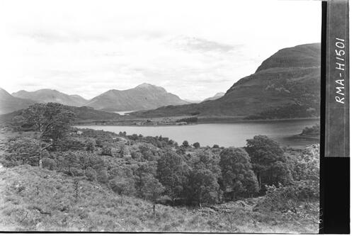 Natural forest, Loch Shieldaig.