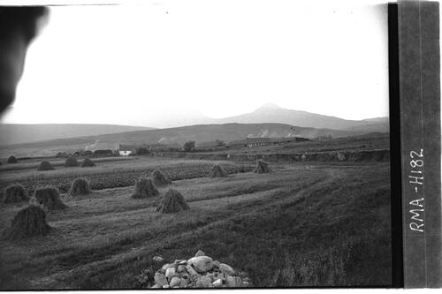 Harvest field, Knockrome, Jura.
