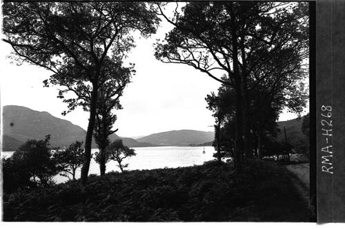 Loch Riddon and oak trees.