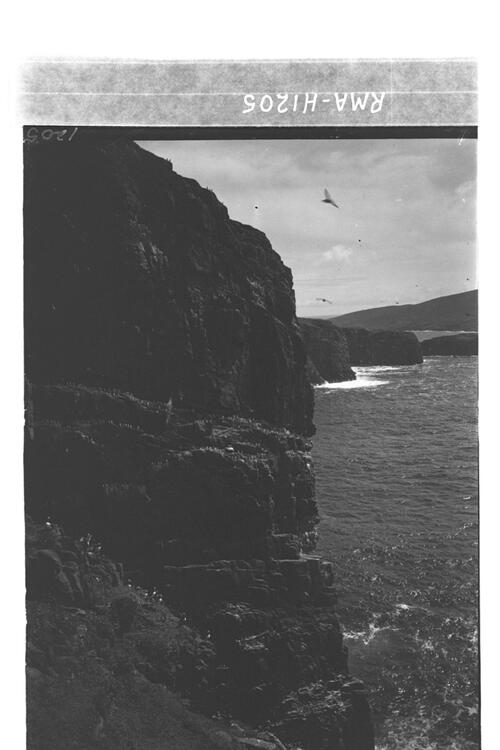 Great guillemot cliff, Mingulay.