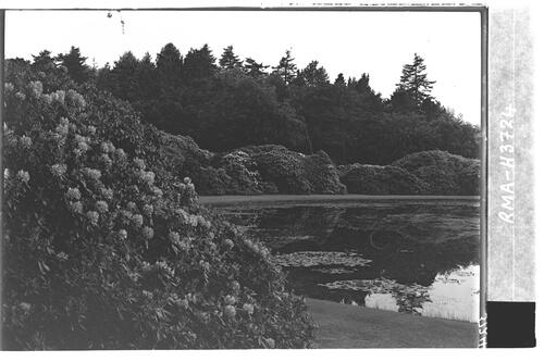 The Lily Pond, Castle Kennedy.