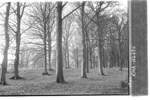 Beech woods, Fyvie Castle.