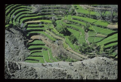 On the trail - on the crest, the Ait Hsayu terraces.