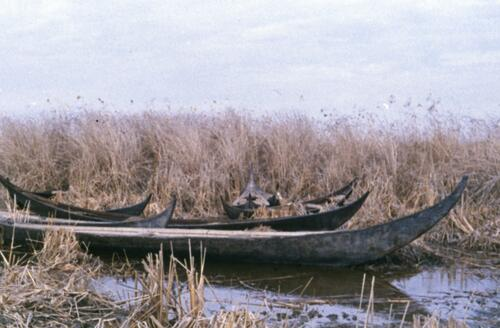 Boats within the marshlands of Southern Iraq