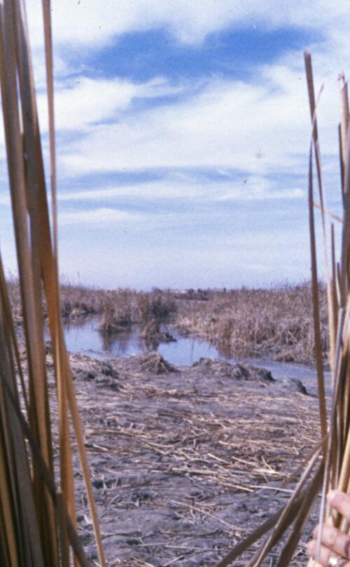 Marshlands of Southern Iraq