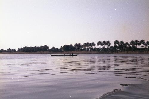Boat within a coastal landscape with palm trees