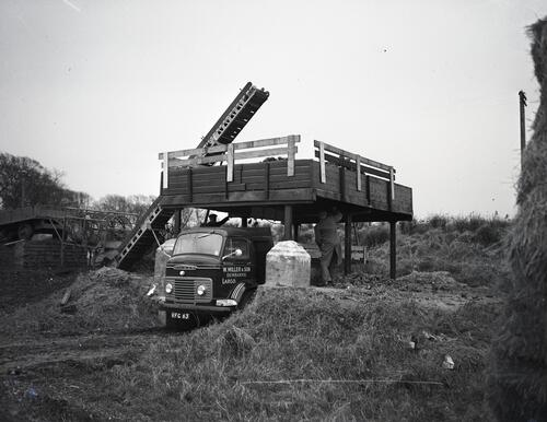 Loading sugar beet onto a lorry at Largo for the British Sugar Corporation beet factory at Cupar.