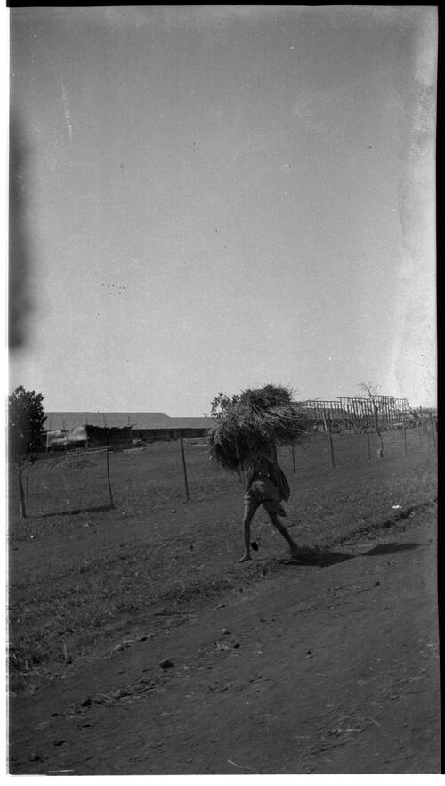 Woman Carrying Grass, Belgaum (Belagavi)